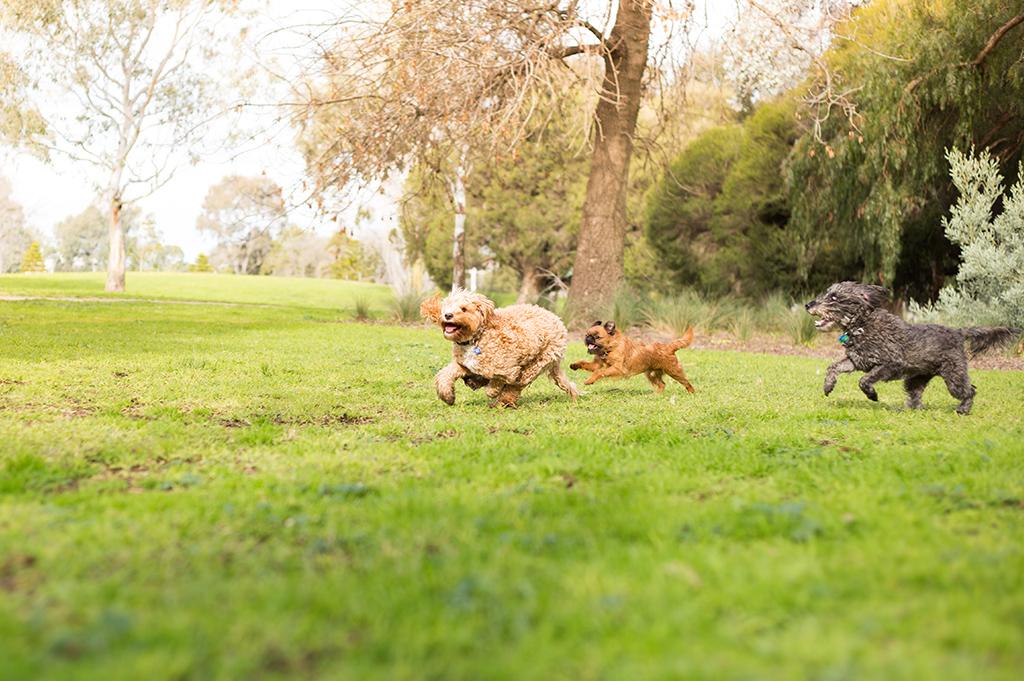 Dog Training, Dog Walking